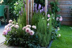 Rosa dahlior i pastellig rabatt Dahlia Flower, Flowers, Zinnias, The Great Outdoors, Garden Plants, Planters, Exterior, Garden Cottage, Inspiration