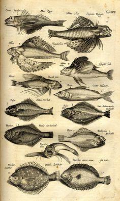 Animal Sketches, Animal Drawings, Art Drawings, Vintage Nautical Tattoo, Scientific Drawing, Biology Art, Merian, Antique Illustration, Hippie Art