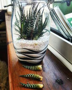 Terrarium with zebra plant Terrarium Cactus, Terrarium Centerpiece, Garden Terrarium, Succulents In Containers, Planting Succulents, Planting Flowers, Zebra Plant, Succulent Display, How To Make Terrariums