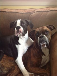"""That's the """"I KNOW you're not asking me to get off the couch"""" face. I know it well."""