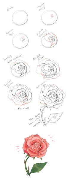 How to draw a rose tutorial by cherrimut on tumblr
