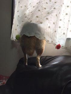 Nàng cún Shiba lầy lội: đã ra đường là không bao giờ chịu về nhà - Ảnh 16. Shibu Inu, Shiba, Animals, Diy Dog, Animales, Animaux, Animal, Animais