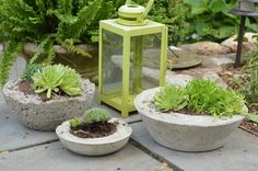 décor de jardin chic-rustique-jardinières-béton-plantes-grasses-faire-soi-même