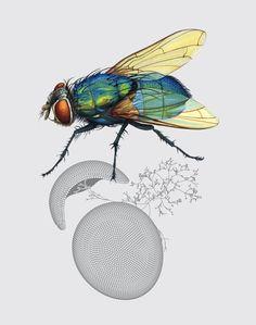 """75 planches d'illustrations conçues avec Myriam Hathout pour le livre """"Industry of Nature"""". Ce livre décrit 75 stratégies mises au point par la nature pour répondre aux besoins de protection, d'aérodynamisme, de camouflage, etc. qui sont aujourd'hui les sources d'inspiration d'innovations technologiques parmi les plus surprenantes. C'est ce qu'on appelle le biomimétisme."""