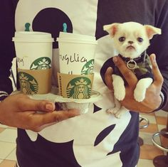 Os 30 Menores Cães Na Terra | PressRoomVIP - Part 9