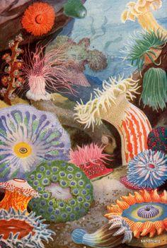 flag of Ocean Simply breathtaking - sea life Illustrations, Illustration Art, Ernst Haeckel, Sea Plants, Underwater Painting, Coral Art, Sea Anemone, Sea Art, Ocean Creatures