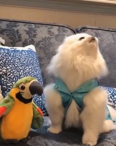 Animals And Pets Videos Friends Cute Animal Memes, Cute Animal Videos, Cute Animal Pictures, Cute Funny Animals, Funny Cute, Cute Gif, The Animals, Cute Little Animals, Small Animals