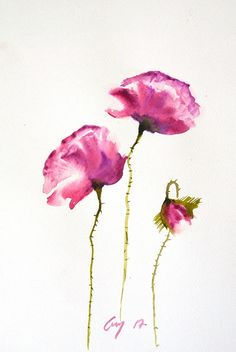 Red puple poppy flowers Original watercolor painting on white