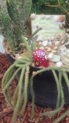 Cactus octopus