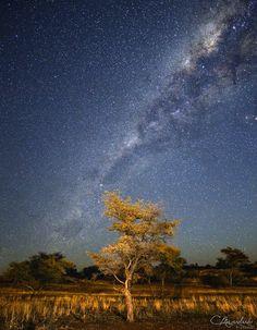 """""""Tree & Milky Way"""" - www.facebook.com/meyerdierkspictures www.carsten-meyerdierks.de"""