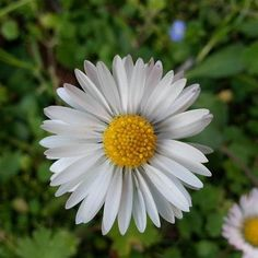 fiore di primavera....jpg