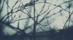 bleak, misty, grainy