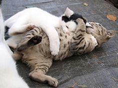 sibling wrestling