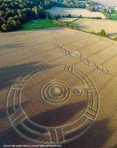 Crop Circle at Ark Lane (3), nr Stroud Green, Essex, United Kingdom. Reported 3rd September 2014