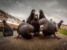 Animals That Look Like They're About to Drop The Hottest Album of the Year