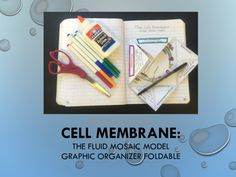 Reviews the main function of cell membrane and its components on a graphic organizer foldable.  Will also assemble a cell membrane in the center of the foldable.  Key included.  9-12 $2