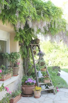 Ladder as means of adding layers of height- ANOTHER perfect idea for our back yard garden oasis that you can create this Summer...We love this!