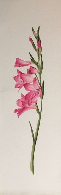 Image result for gladiolus tattoo