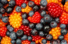 Berries have been shown to be some of the healthiest foods on the planet. It seems new research is constantly being published and berries are being recognized and analyzed for their health giving properties. Extremely high in antioxidants, berries are a great snack by themselves or added to a dish