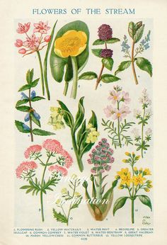 1933 Antique flower art print, FLOWERS Of The STREAM, double sided floral bookplate prints, botanical flower art illustration via Etsy