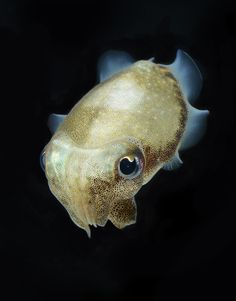 Cuttlefish have donut shaped brains, green blood and three hearts. Deep Sea Creatures, All Gods Creatures, Underwater Creatures, Underwater Life, Beautiful Creatures, Animals Beautiful, Cute Animals, Art Chinois, Merian