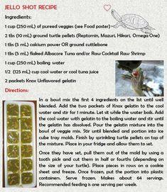 Russian Tortoise Diet Guide / Helpful Tips And Tricks Turtle Care, Pet Turtle, Turtle Diet, Jello Shot Recipes, Jello Shots, Russian Tortoise Care, Slider Turtle, Turtle Habitat, Aquatic Turtles