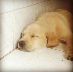 Feeling Sleepy...