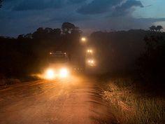 Photos taken on our Amazon rainforest adventures in northern Brazil.  Photos of the Amazon jungle, Tapajos River, Fordlandia, Belterra, Pará, Santerem and the big trees of the Amazon Region.