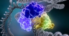 telomerase enzyme can stop aging?
