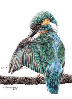 Eisvogel, Buntstift, A4