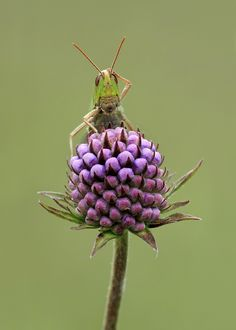Matt Cole Wildlife Photography: Insect Macro Photography Hints and Tips