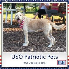 The USO often has furry volunteers at some of our centers to offer therapeutic assistance and sometimes just a good snuggle creating USO moments for our troops. Your pet, like Graham here, can help show his/her support for troops, too, by using the hashtag #USOpatrioticpets!