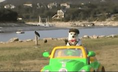 New party member! Tags: dog halloween driving costume