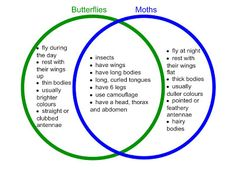 Venn diagram for compare/contrast analysis. Science Lessons, Teaching Science, Moth Vs Butterfly, 1st Grade Science, Academic Writing, Study Skills, Compare And Contrast, Teacher Blogs, Illusions