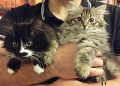 #AssociationDesChatsetDesHommes #chatsabandonnés #adoption #félin #amourdesanimaux #bonheur #lovecat #kitten
