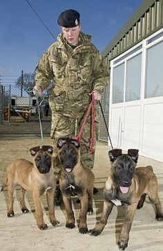 Lance Corporal Adele Wilkinson with Joe, Jinx and Keith, the 13 week old Belgian Malinois puppies who have just started their training.