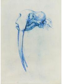 Walrus by Bryan Kneale