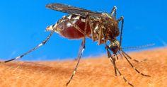 Próximo verão será o 1º com dengue e chikungunya circulando no país