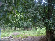 Forests of Bastar, Backyard from backyard of my friends house