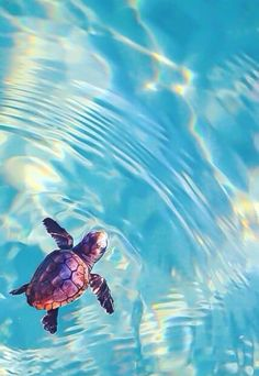 Tortuga En el Agua. #nature