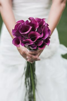 Bride's Bouquet Of Purple Calla Lilies + Green Cascading Lily Grass & Bear Grass Calla Lily Wedding, Purple Wedding, Floral Wedding, Dream Wedding, Wedding Day, Bridal Bouquet Pink, Bride Bouquets, Wedding Cakes With Flowers, Bridal Flowers