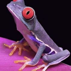I just love frogs!! This one's a bit of a color rebel! #purple #frog #cute #quirky #fashion #inspiration #pink