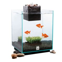 Hagen: Chi Aquarium 5 Gallon Set