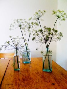 Dill Weed. After stripping off the leaves to use in a meal, use the seed heads as an arrangement. If you let the seeds dry, they can even go in next years garden!