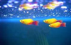 Akwariarz: Napowietrzanie akwarium