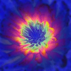 """DG SPECTRUM FLOWER GIF: Reverse-blooming Flower.  ('Animated Photo - """"TRIPPY HIPPIE"""" - Jay D, Owner.')               NOTE: THIS IS THE ONLY GIF IN THE """"VISIT"""" SECTION OF THIS PIN."""