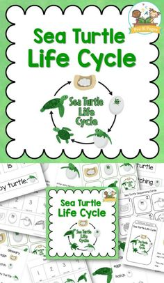 SEA TURTLE LIFE CYCLE: Sea Turtle Life Cycle Printables for Kindergarten. 27 pages of life cycle learning activities for your Pre-K or Kindergarten students! (AD)