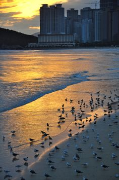 Busan Beach, South Korea - Visit http://asiaexpatguides.com and make the most of your experience in Korea! Like our FB page https://www.facebook.com/pages/Asia-Expat-Guides/162063957304747 and Follow our Twitter https://twitter.com/AsiaExpatGuides for more #ExpatTips and inspiration! Nice place to swim in October.