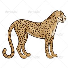 Vector illustration of a cheetah isolated on a white background. Editable EPS8 (you can use any vector program), AI in CS3 version