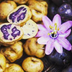 En el #Perú existen más de 3000 variedades de #papa con las que se preparan una inmensa variedad de recetas de la cocina peruana. Prúebalas en #Madridfusión #Perú #MF16 #recetasdePerú #delicious #tasty #instatravel #travelgram #gotogether #mustvisit #instagood #VisitPeru #DiscoverYourselfInPeru #DescubreteEnPeru #food #potato #eatperuvian #Peru by peru